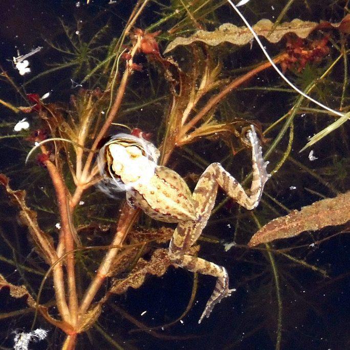 Large New Pond Starter Pack - Wildlife